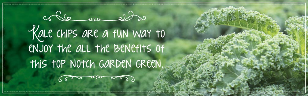 Kale Chips are a fun way to enjoy all the benefits of this top notch garden green.